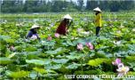 voyage de luxe au vietnam avec viet colours travel