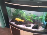 aquarium avec meuble et pompe intégré